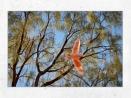Cockatoo, Australie - Toile 40x60 par Esprit Combi - 54,00 €