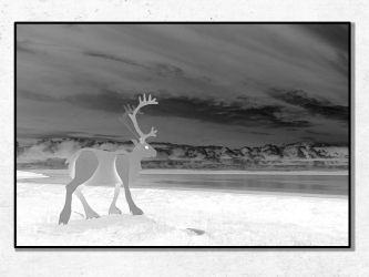 Le Renne Blanc, Norvège - Tirages 50x70