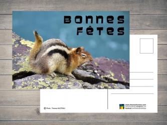 Carte postale Bonnes Fêtes