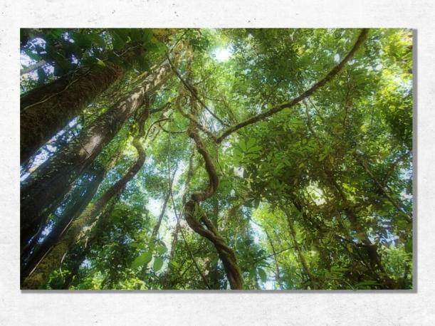 La Jungle, Guyane - Toile 40x60 par Esprit Combi - 58,00 €