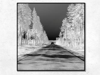 Forêt, Norvège - Tirages 50x50